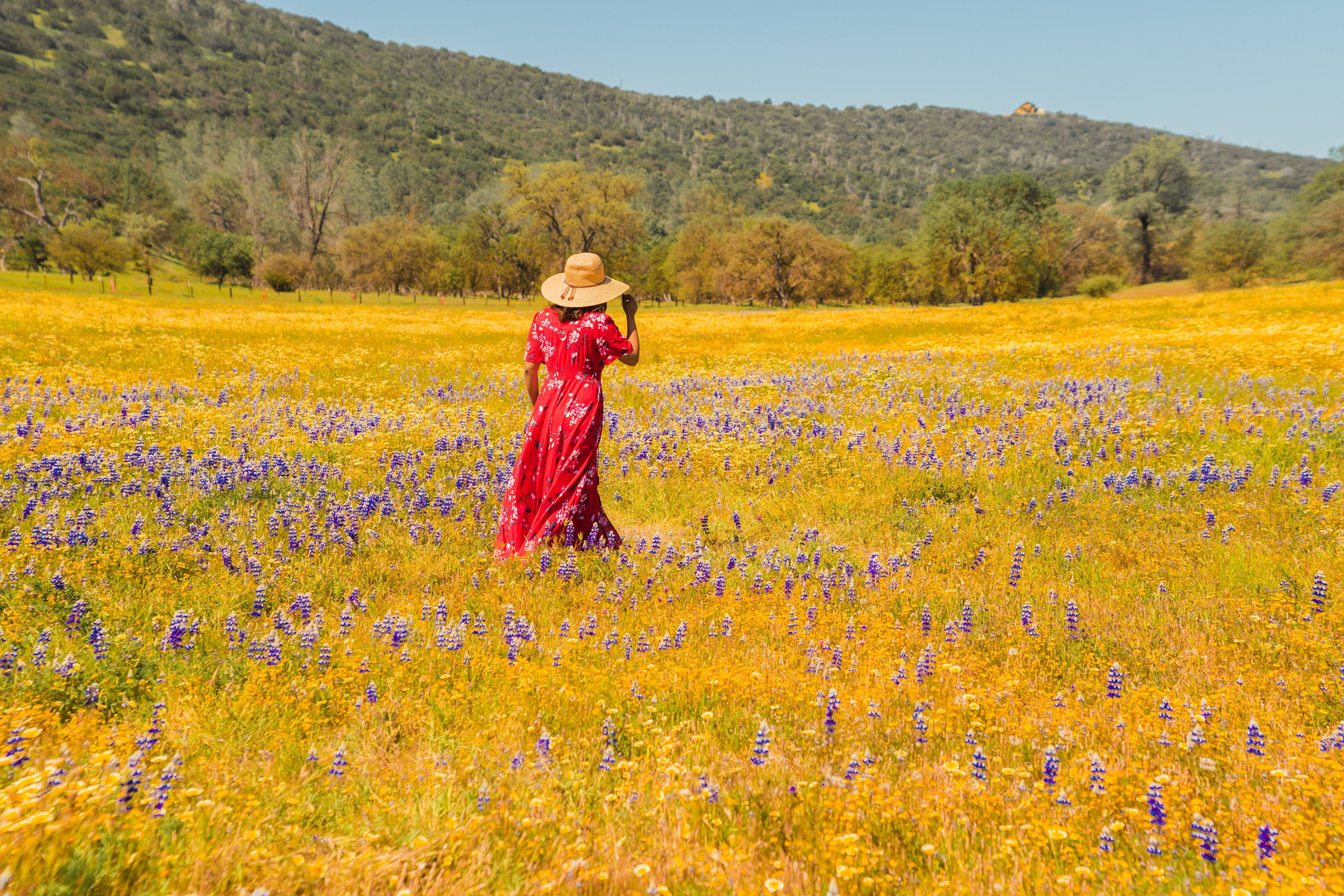 5 Best Places To See Superbloom Around Bay Area A Charming Escape