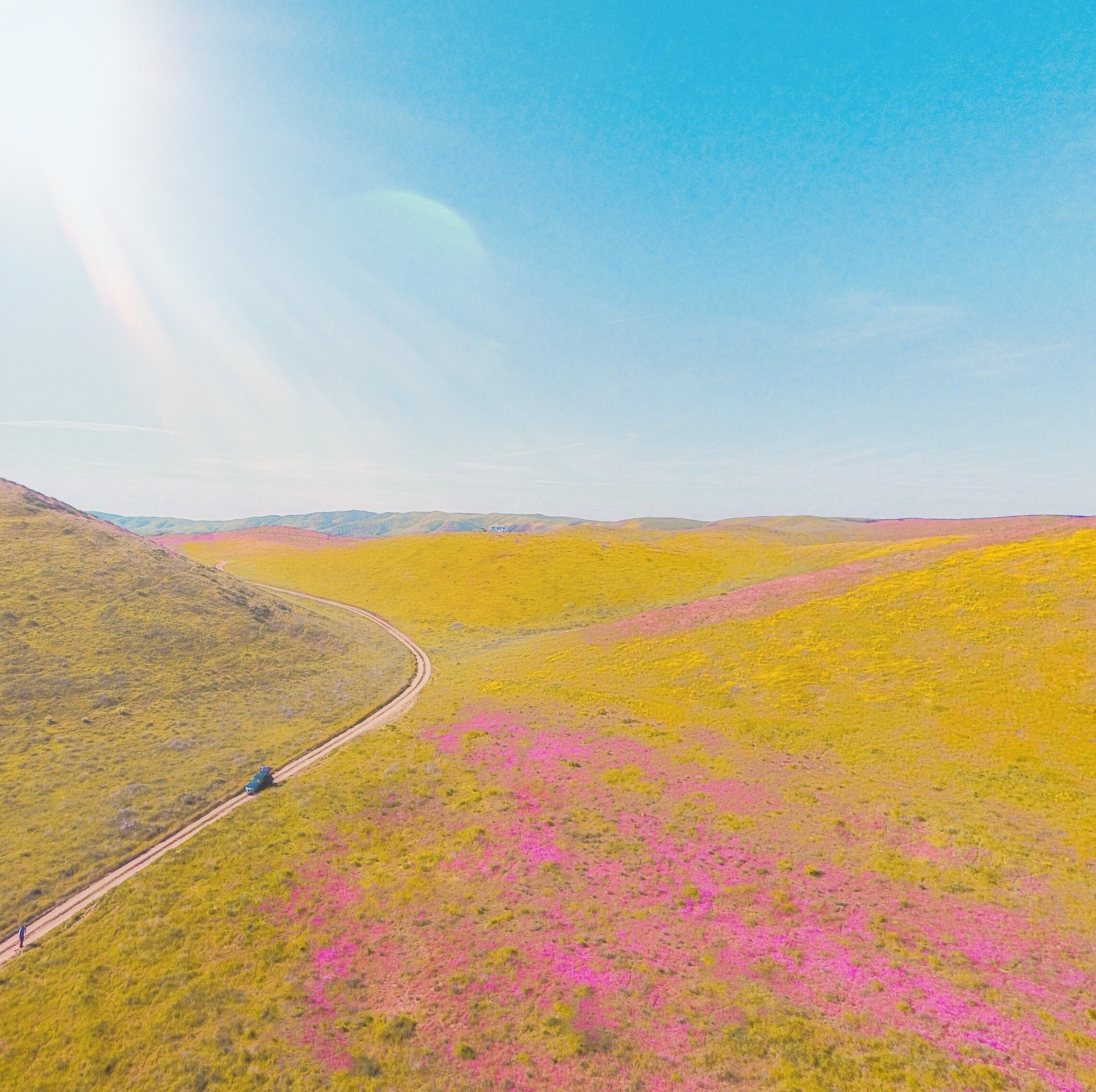 yellow and pink flowers, Carrizo Plain National Monument