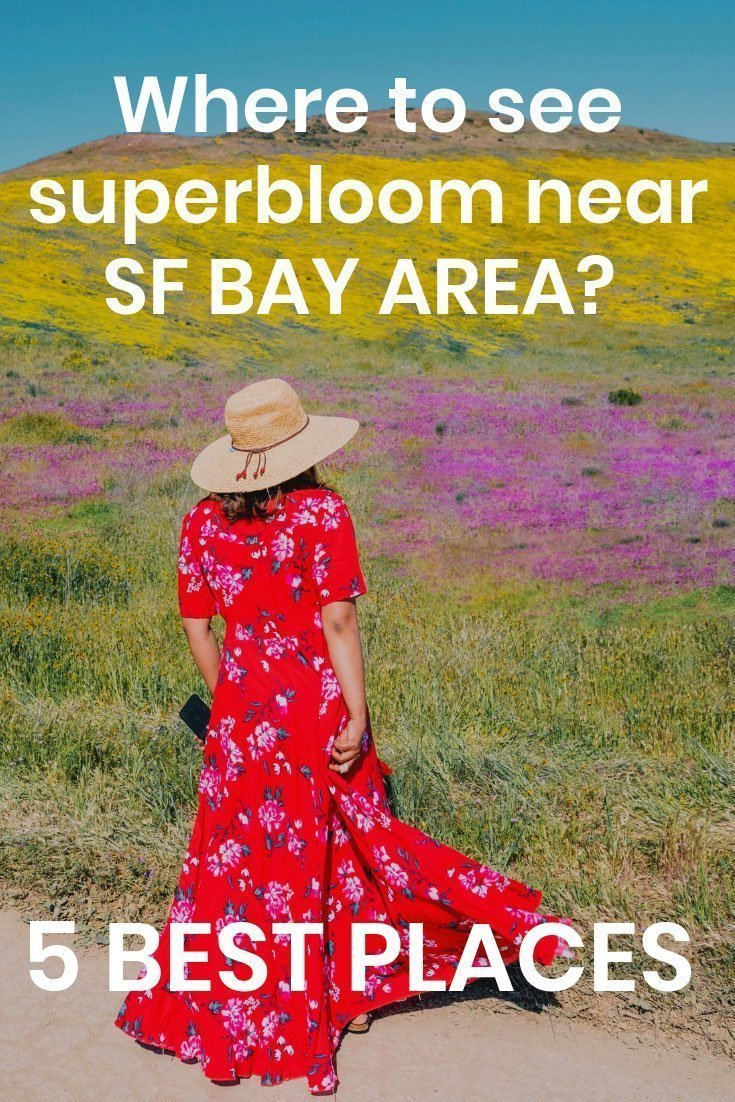 superbloom_bayarea2_web