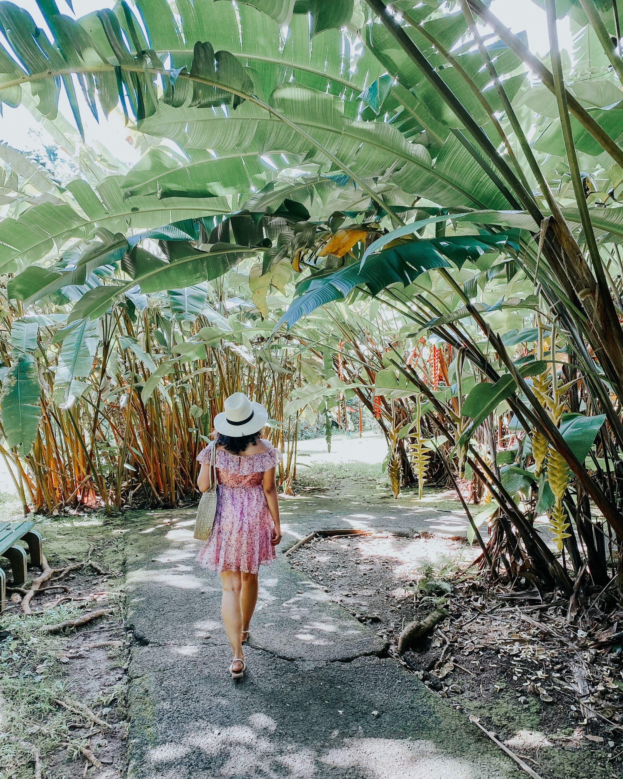 Ho'omaluhia botanical gardens banana plants