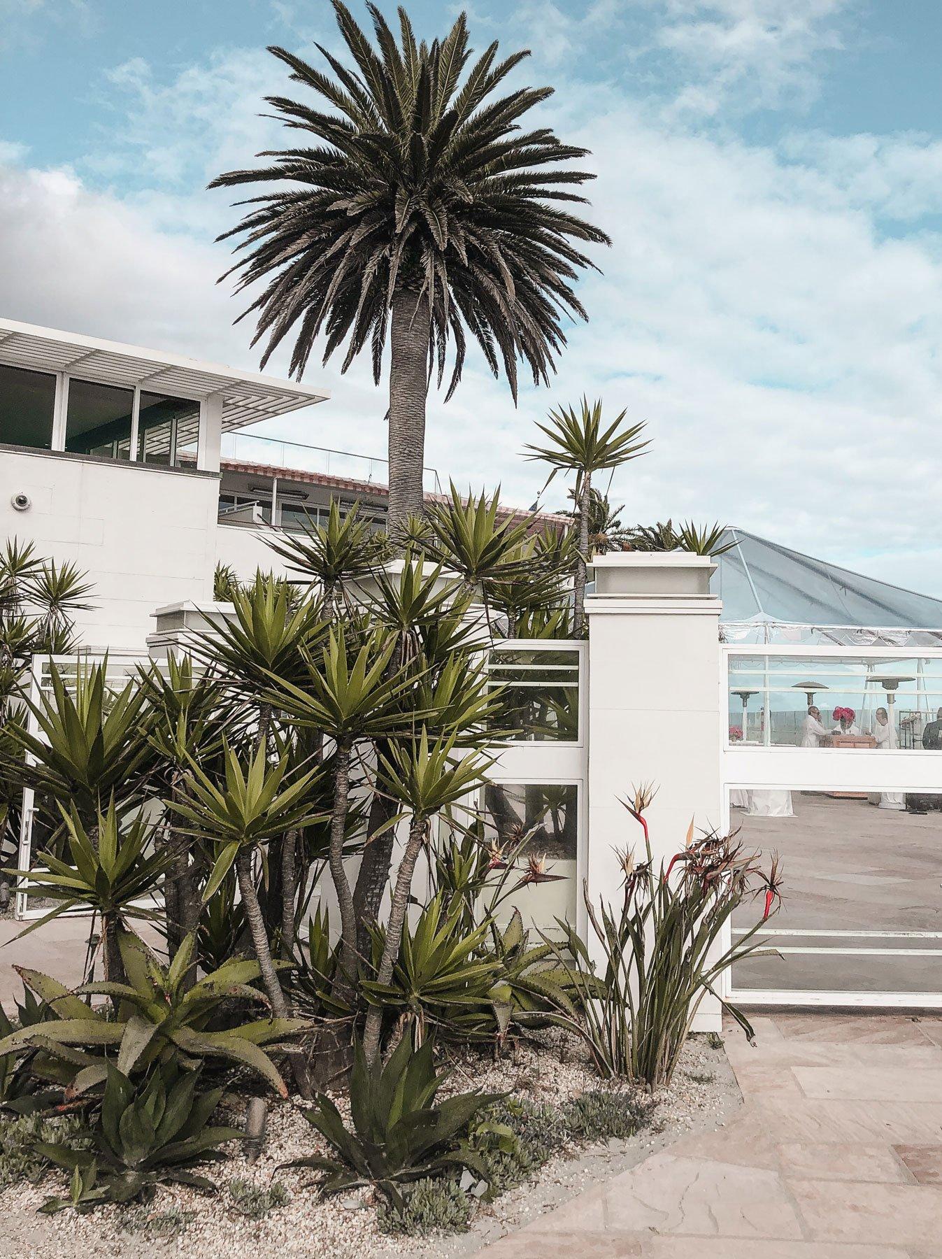 Cacti plants Montecito