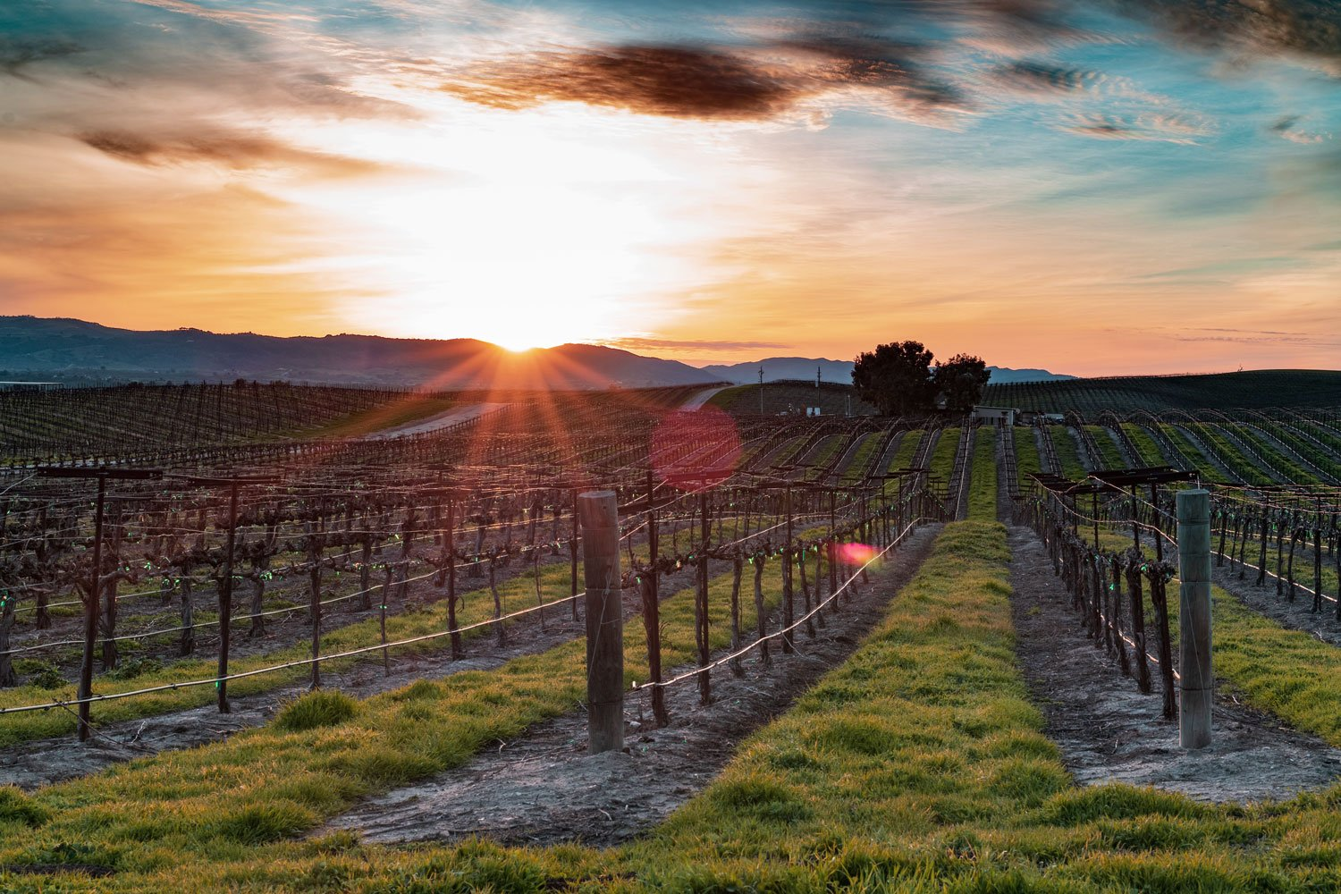 Sunset over vineyards, Paso Robles
