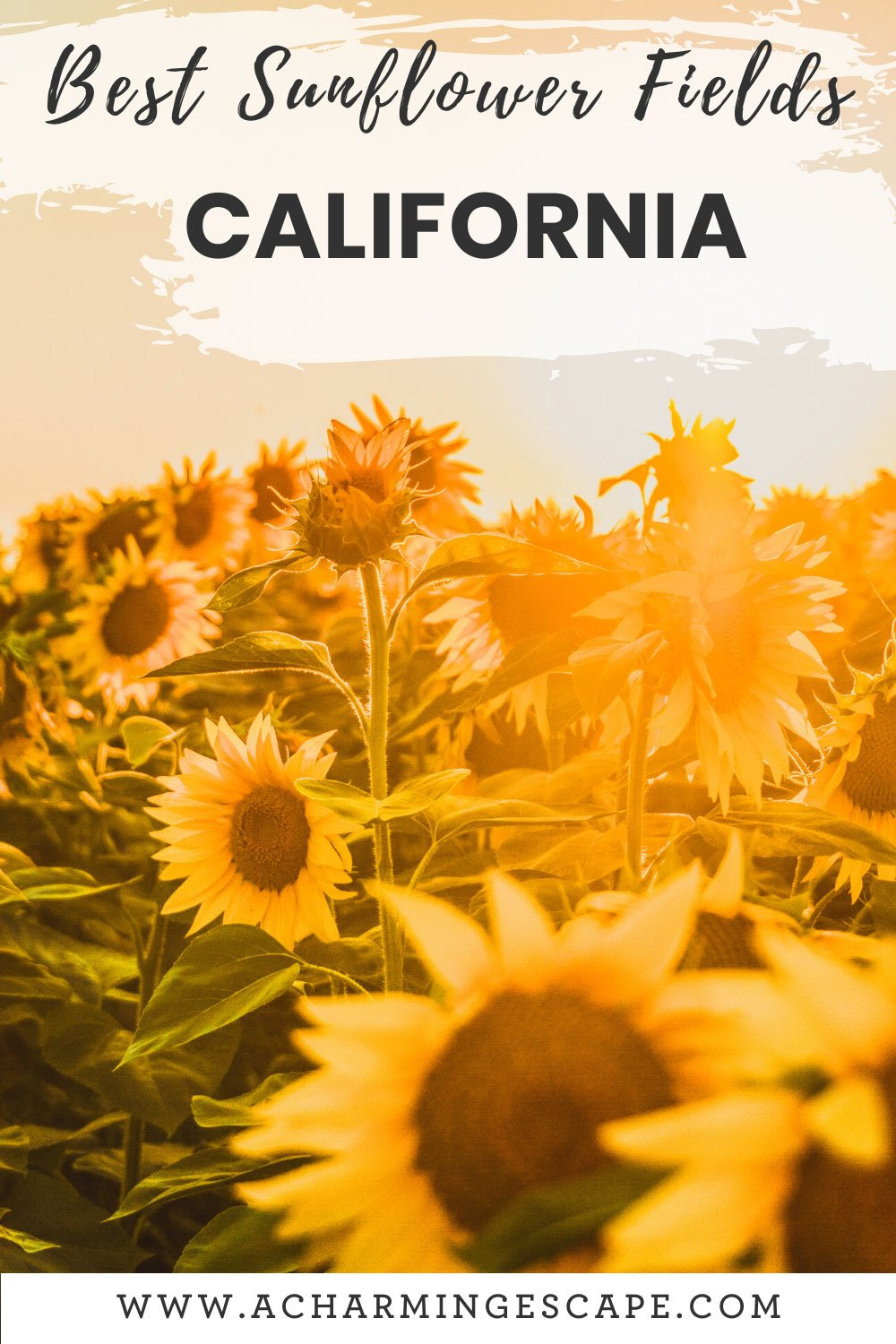 Best sunflower fields in California