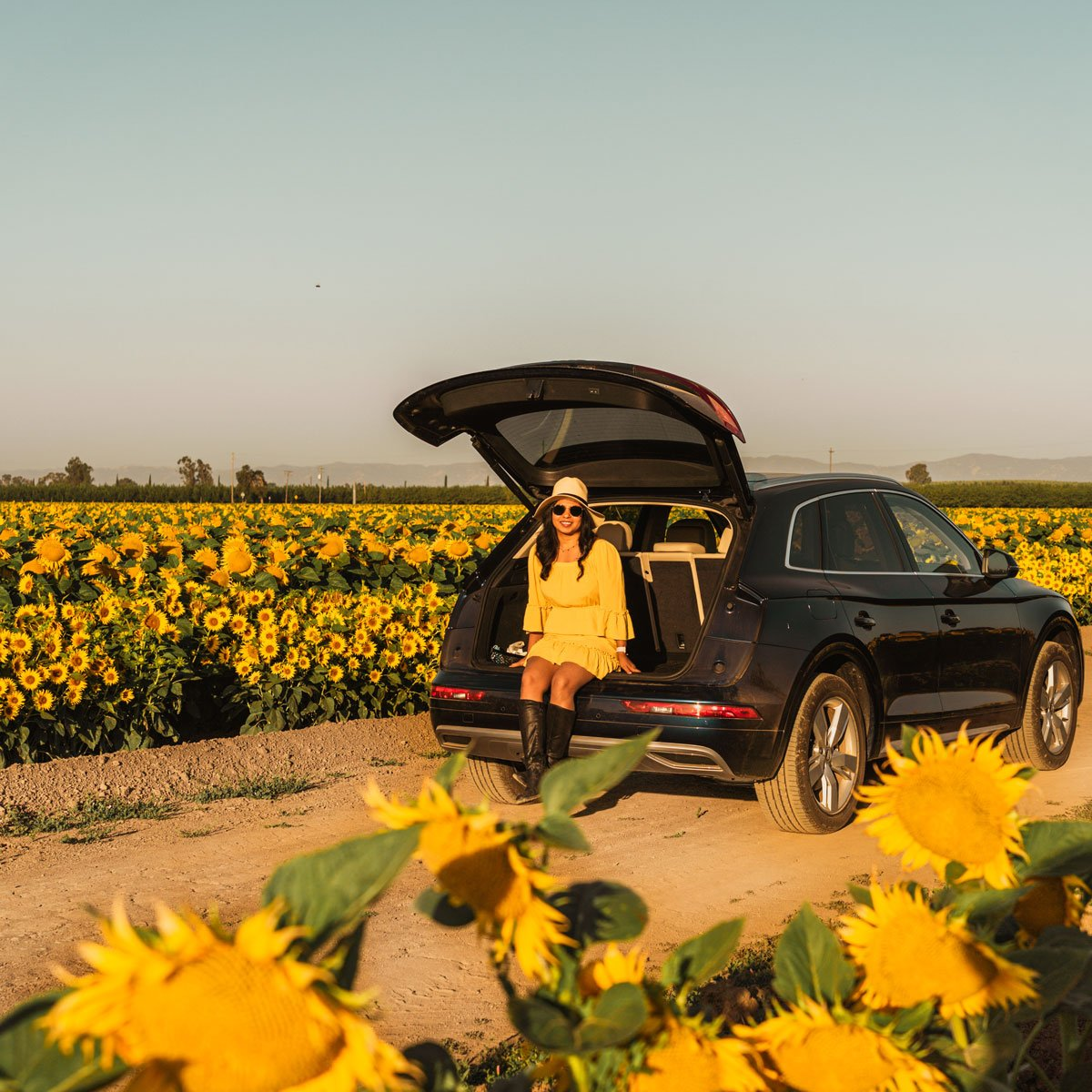 Woodland California sunflower fields, woman in a car
