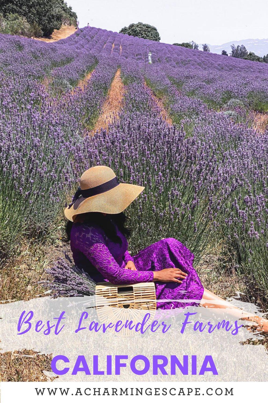 Best lavender fields, California