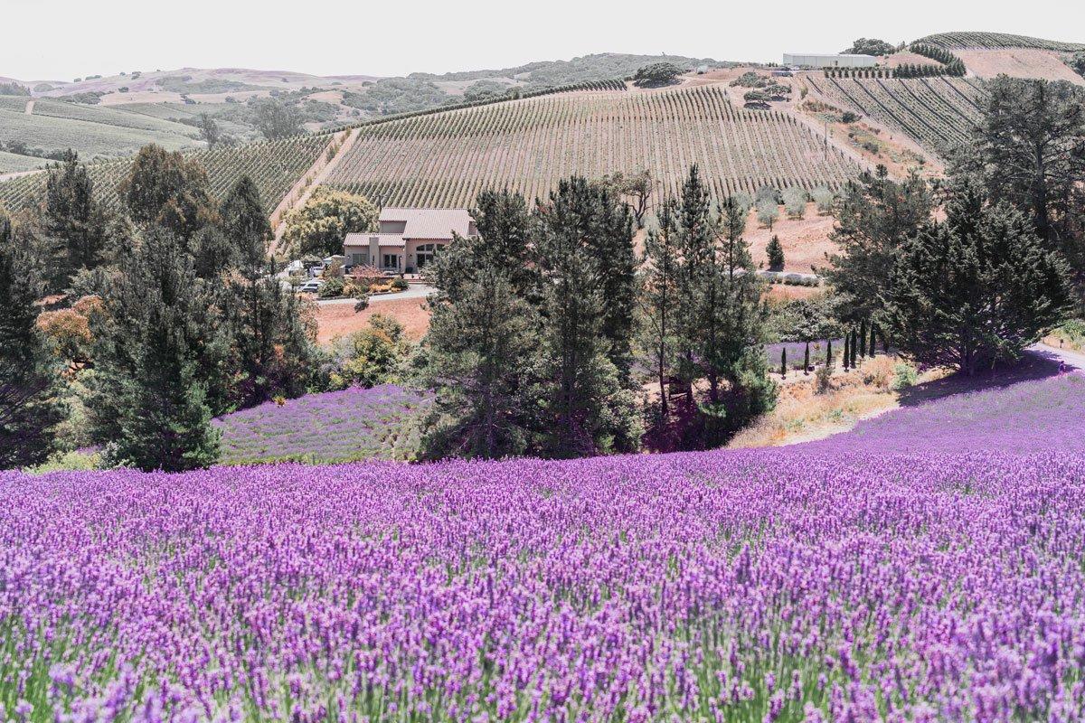 Monte Bellaria di California, Sebastopol, California