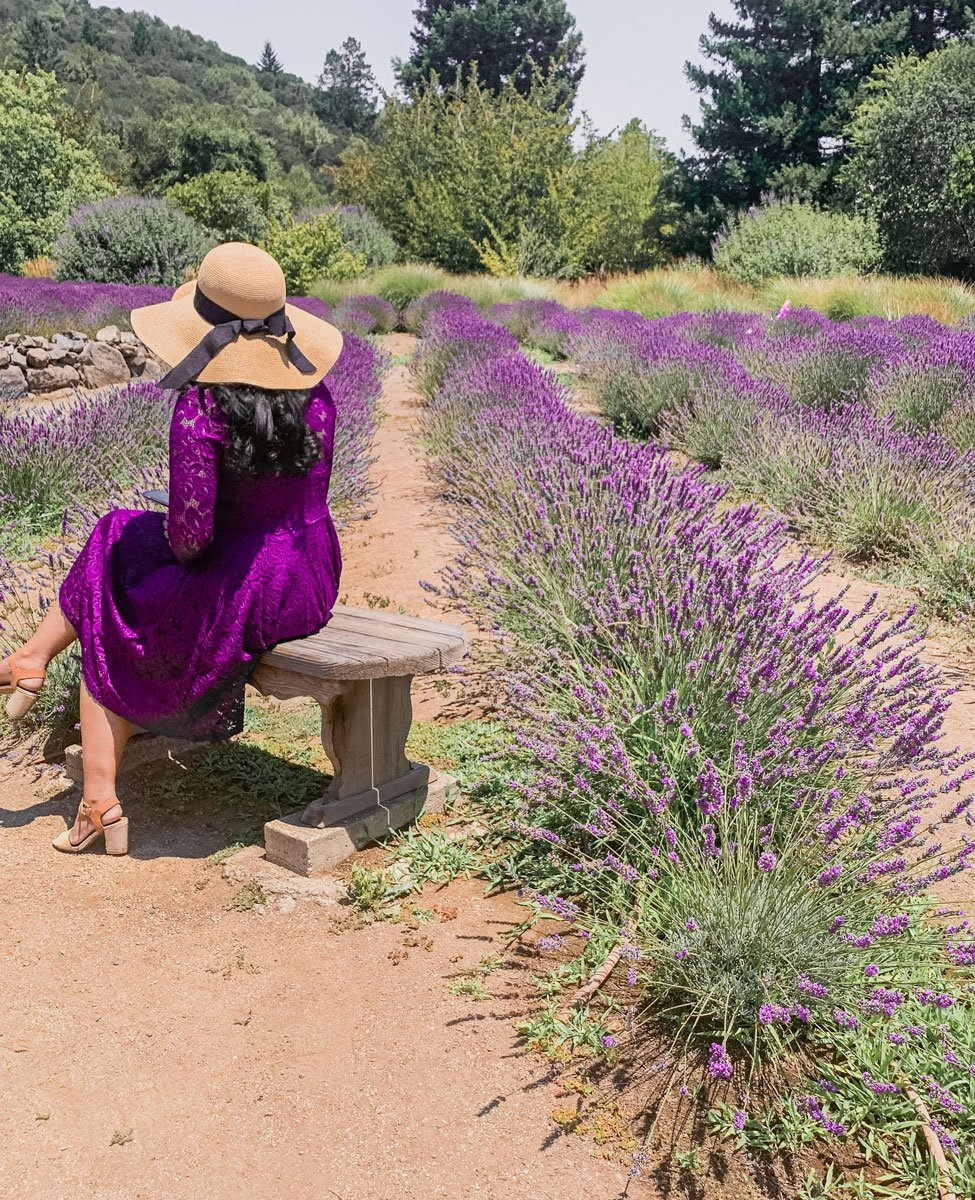 Matanzas Creek Winery lavender