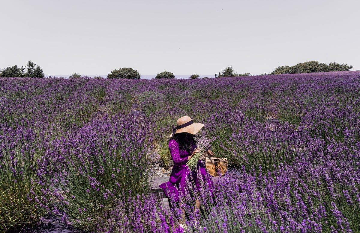 Woman sitting in lavender farm, California