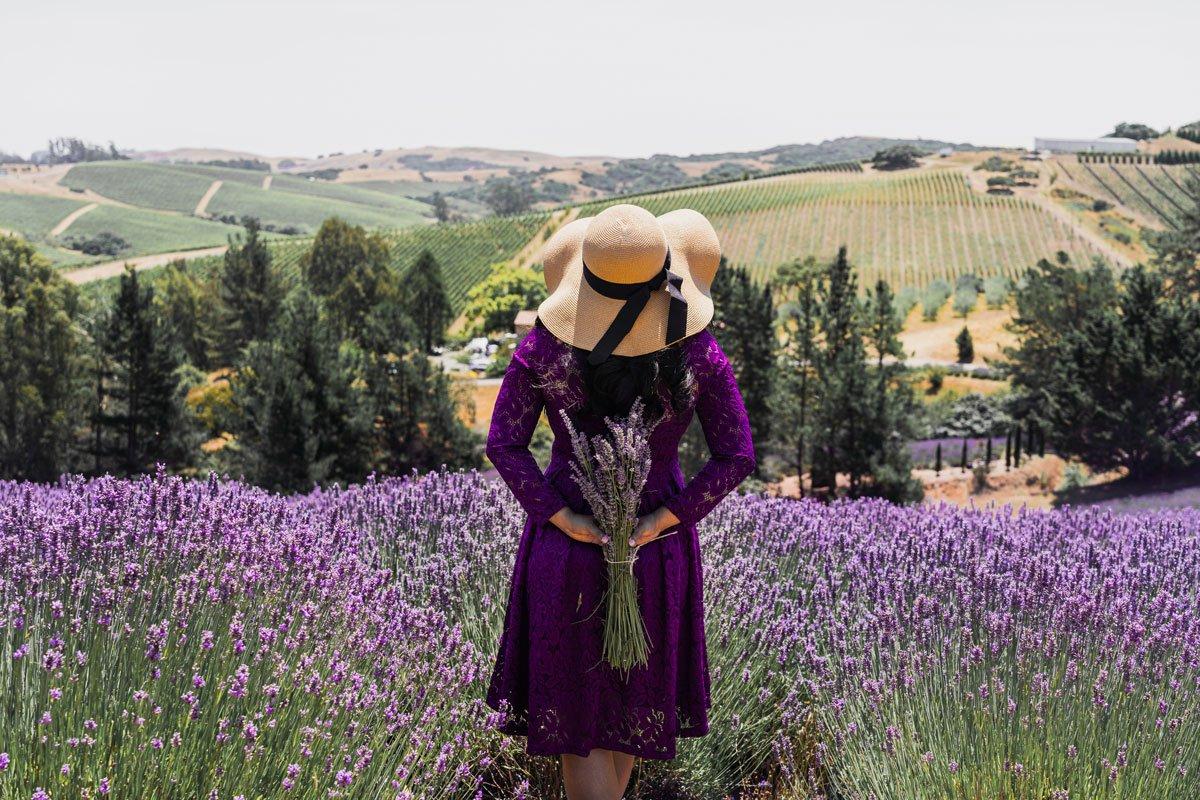 Monte Bellaria di California lavender farm