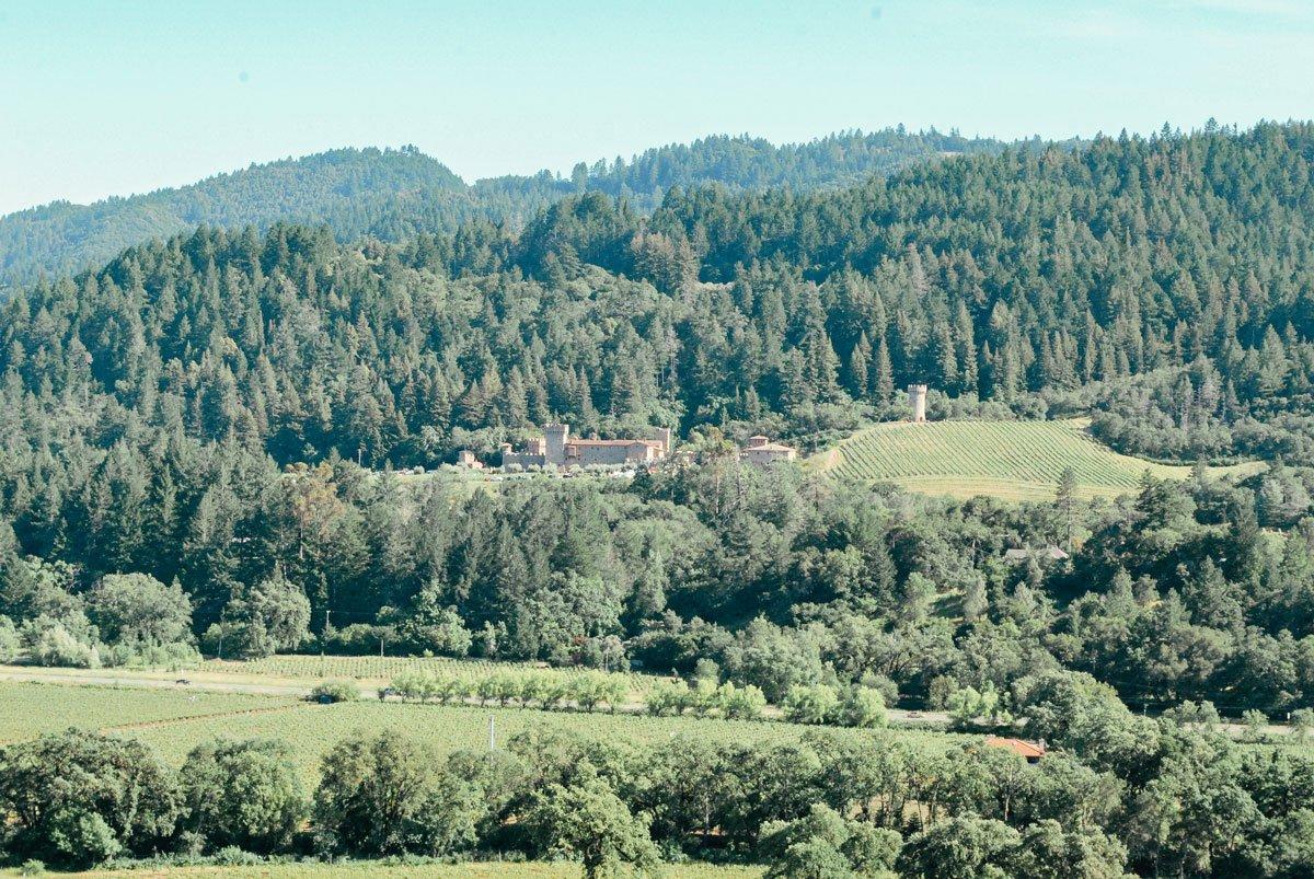 Vineyard views from Sterling Vineyards