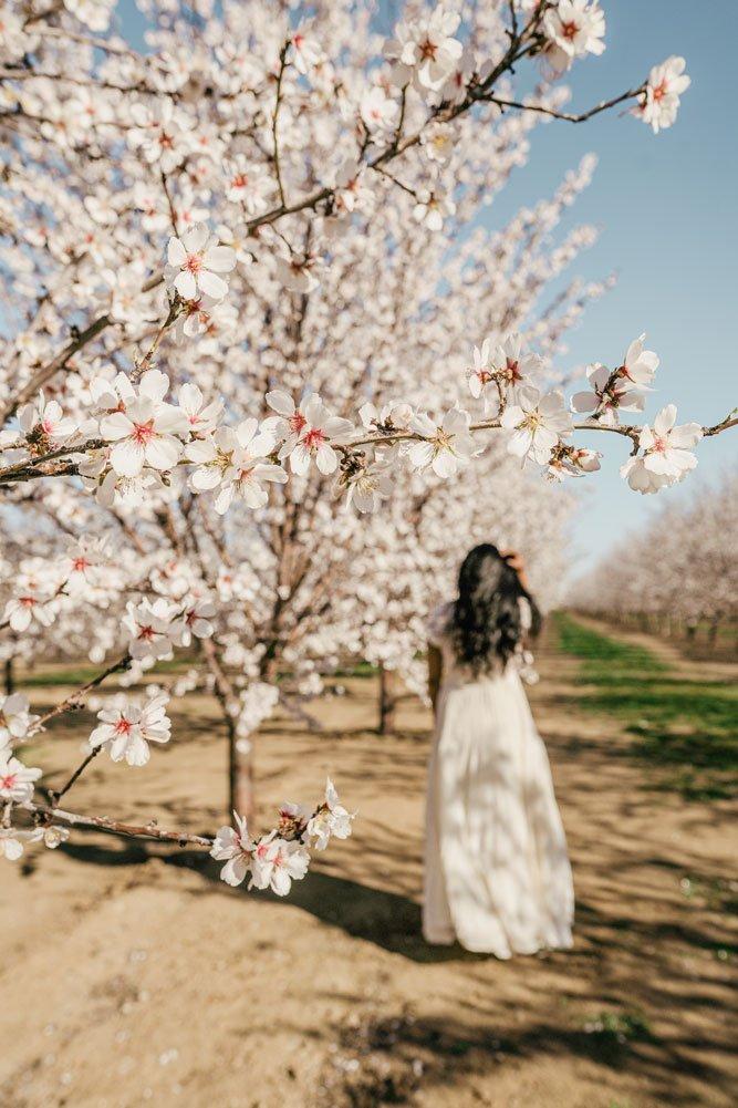 Woman among almond flowers, Winters