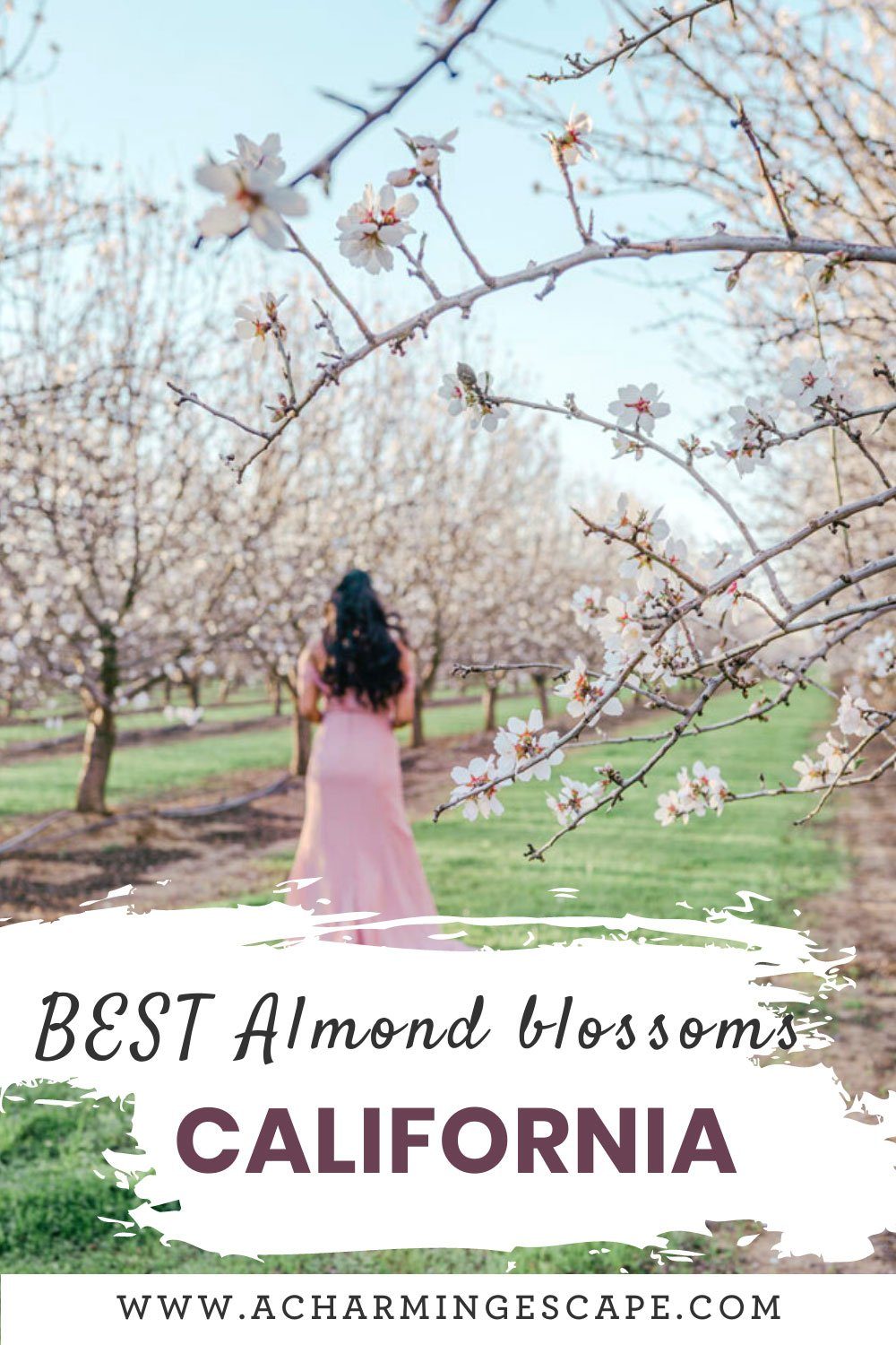 5 Best Almond blossoms in California