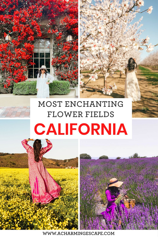 Most enchanting flower fields in California