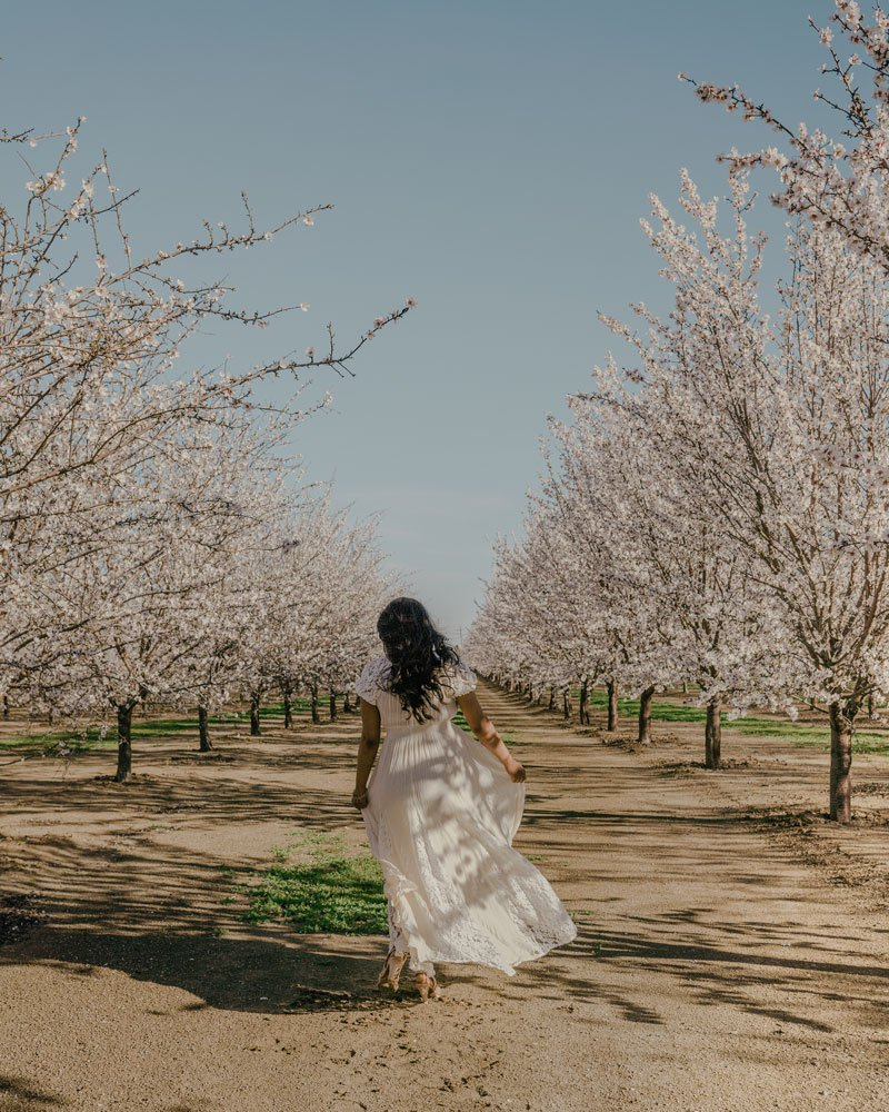 Woman among almond trees and blossoms Winters, California