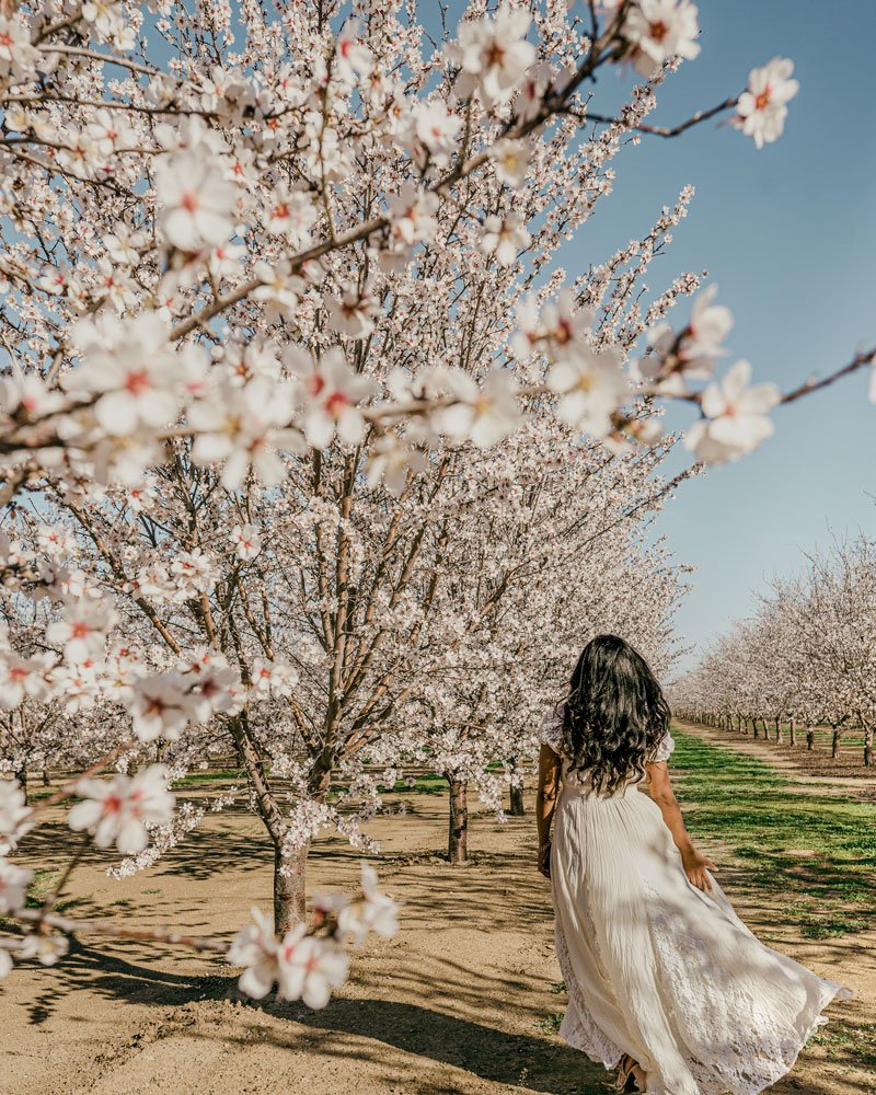 Woman in Almond orchard