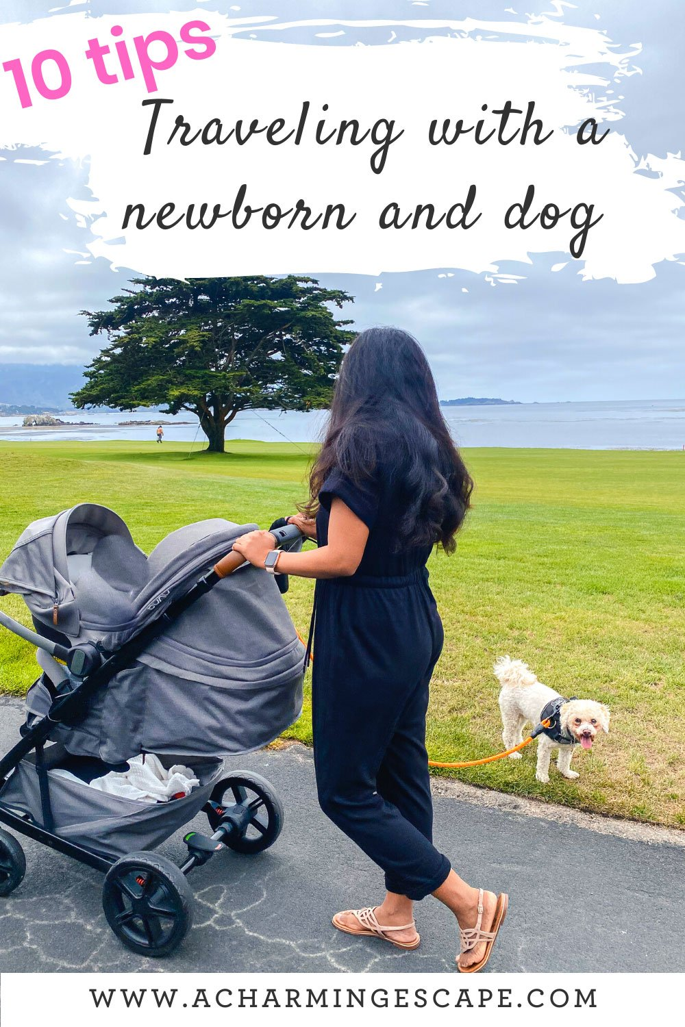 tips for traveling with a newborn and a dog