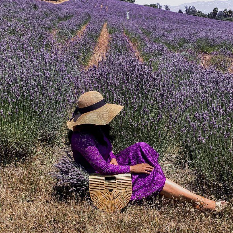 Lavender farm, Sonoma County, California