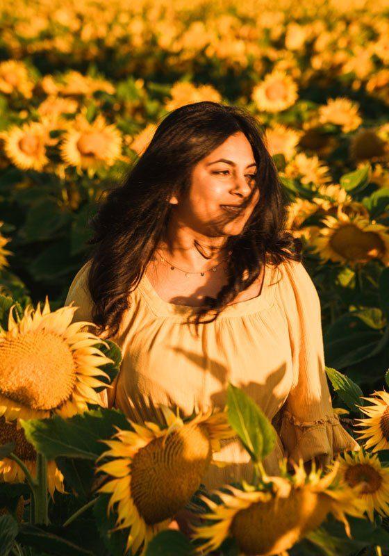 Sunflower fields Northern California